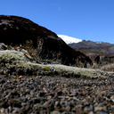 habitat-near-ski-area-Tongariro-2015-11-05-IMG 6262