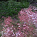 clay-red-and-white-on-summit-trail-Rotorua-Rainbow-Mt-03-06-2011-IMG 8190
