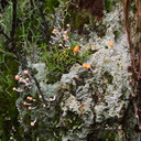 lichen-and-stalked-coral-fungus-ascomycete-Okere-Falls-05-06-2011-IMG 8221