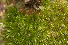 moss-Te-Paupo-trail-Lake-Okataina-06-06-2011-IMG 2302