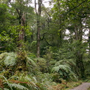 forest-near-Aniwaniwa-Visitor-Centre-Waikaremoana-2015-10-22-IMG 6013