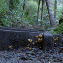 mushrooms-conquering-the-world-starting-with-the-path-Drummond-track-Parihaka-2016-06-21-IMG 7000