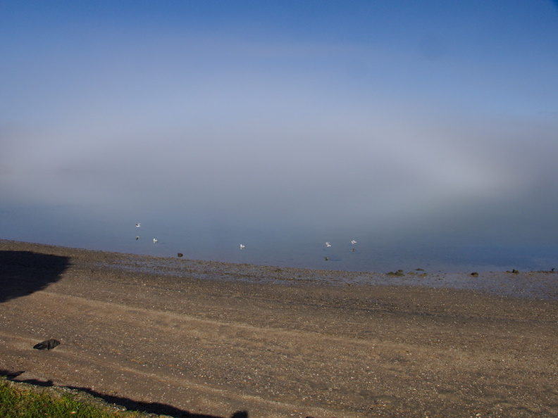 fogbow-at-Beach-Rd-Onerahi-2016-06-20-IMG 6992