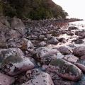 intertidal-pink-growth-covered-rocks-brown-seaweed-Smugglers-Cove-Whangarei-Heads-2013-07-09-IMG 2520
