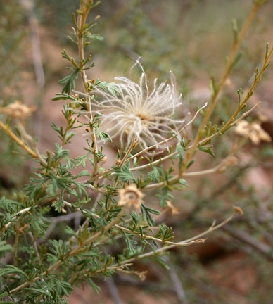 apache-cliff-rose-1-Capitol-Reef-2005-07-23