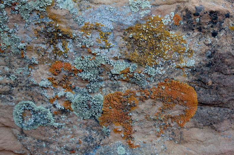 lichens-Daddy-Canyon-Nine-Mile-Canyon-Uintas-2016-11-07-IMG_3528.jpg