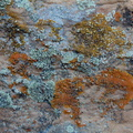 lichens-Daddy-Canyon-Nine-Mile-Canyon-Uintas-2016-11-07-IMG 3528