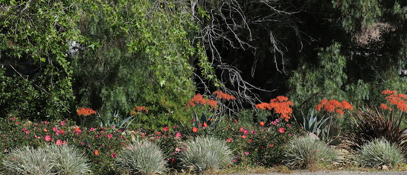 xeriscaping-done-well-Santa-Rosa-Rd-Vista-Arroyo-2015-02-12-IMG_4417.jpg