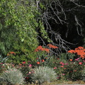 xeriscaping-done-well-Santa-Rosa-Rd-Vista-Arroyo-2015-02-12-IMG 4417