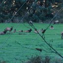 elk-herd-Oregon-2014-11-08-IMG 0275.