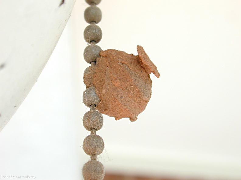 potter_wasp_nest_on_pullchain2.jpg