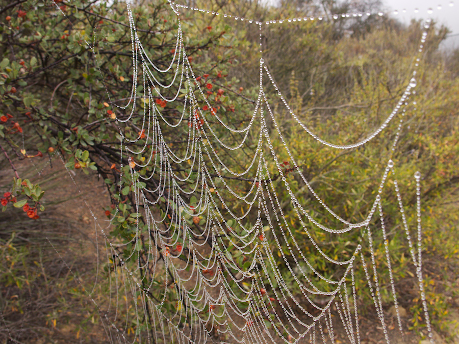 misty-cobweb-Angel-Vista-overlook-2016-06-01-IMG 5083