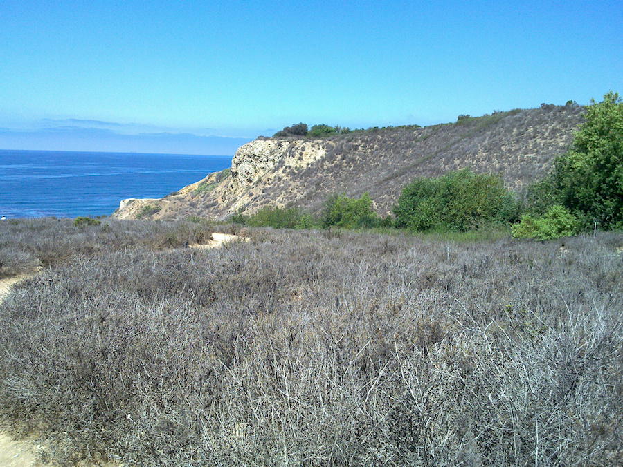 view-drought-dry-chaparral-Leo-Carrillo-20130805 003 1