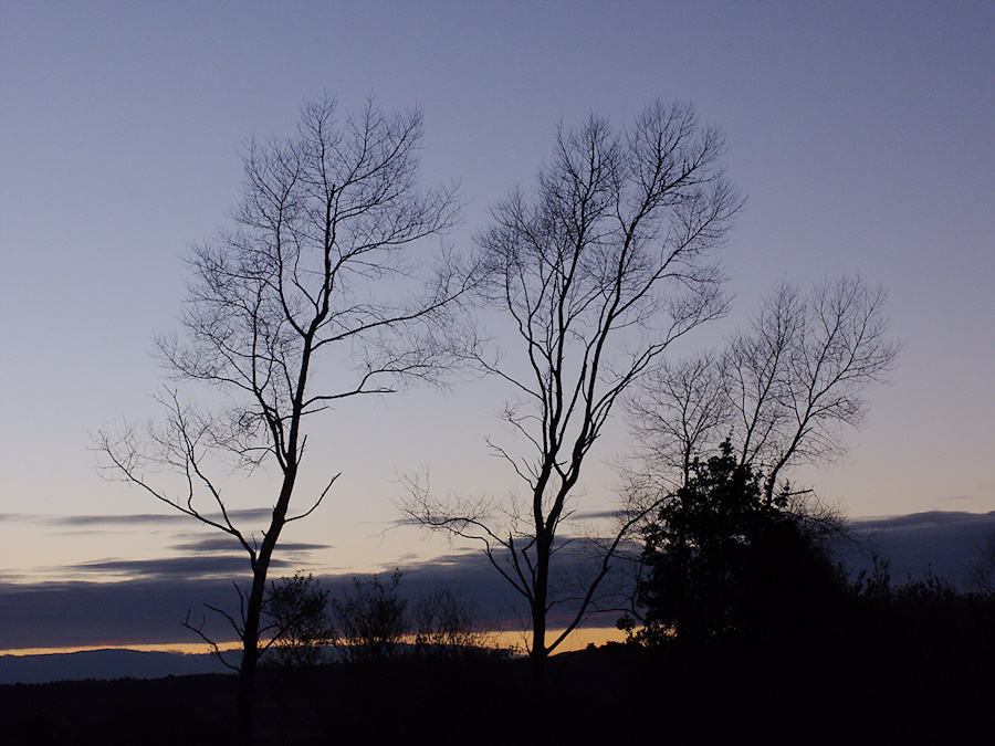 trees-silhouetted-in-twilight-at-campsite-Pureora-2013-06-21-IMG 1814