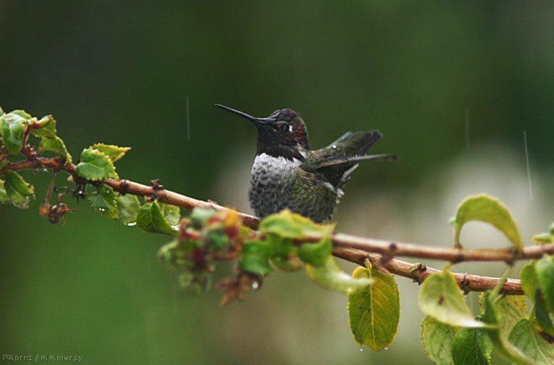 Hummingbird Habitats - Hummingbirds Plus